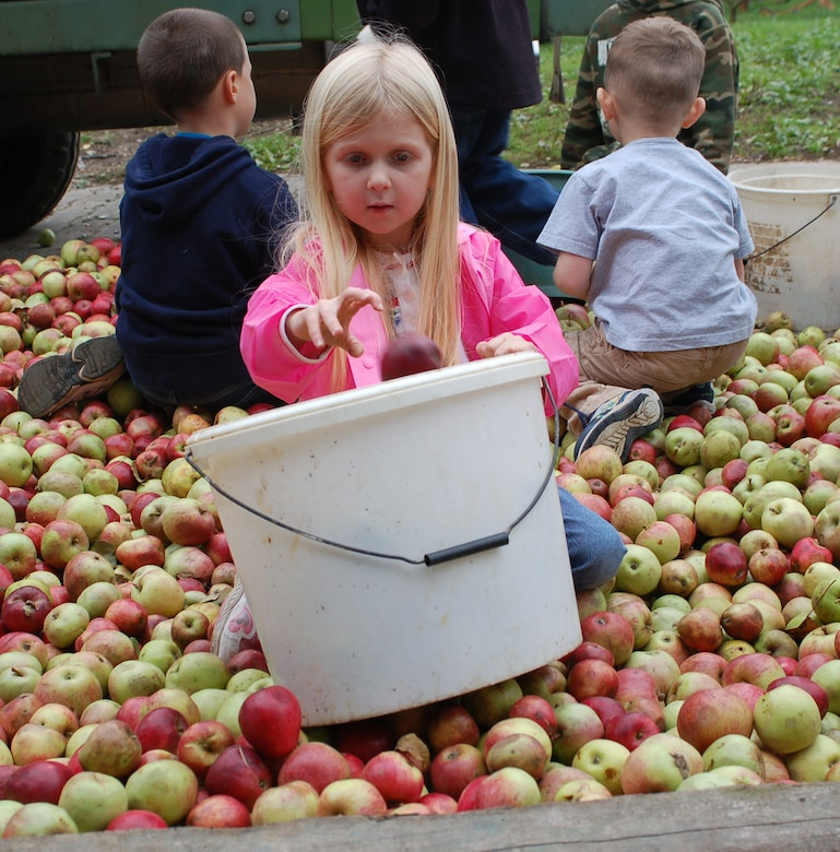 OSANN-MONZEL, Germany—A small girl puts apples into a bucket one by one to help make apple cider juice. About 20 children from the Spangdahlem Homeschooling Group took part in a recent field trip to the Sailer-Cipolla winery in Osann-Monzel.  The children enjoyed tasting the sweet juice afterward. (U.S. Air Force photo/Iris Reiff)