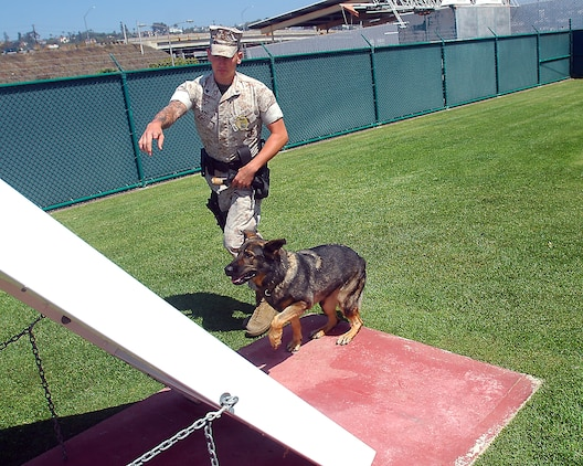 Cpl. Arnold A. Apel, military working dog handler, Provost Marshal's Office, trains Nora through an obstacle course Sept. 2. It's crucial to train the dogs daily to keep them percise in the duties as well as certified.
