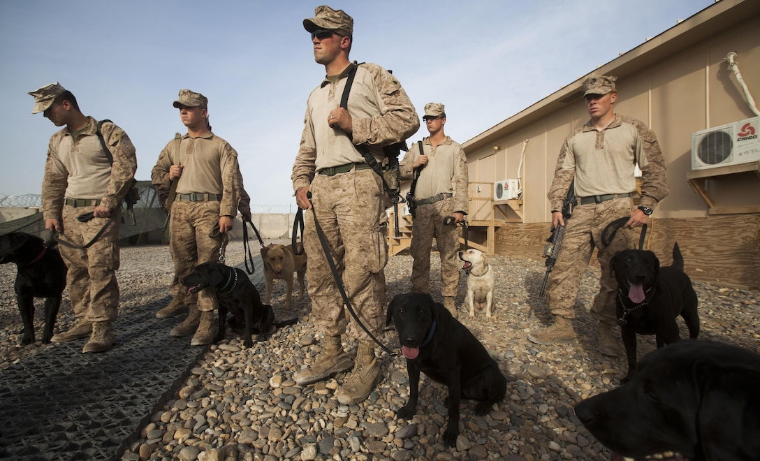 """Sgt. Steven Basham, a native of Hawesville, Ky., gathers with approximately 20 dog-handlers and improvised explosive device detection dogs throughout the RCT-1 battalions to conduct training at Camp Dwyer, Helmand province, Afghanistan, April. 13. Basham is the kennel supervisor with 2nd Battalion, 8th Marine Regiment. The dogs and their handlers received training in verbal and non-verbal commands, emergency and routine medical training, and the latest tactics for finding IEDS, said Maj. Michael Hays, the counter IED officer for RCT-1. """"The [dogs and their handlers] play a valuable roll within the counter IED fight,"""" said Hays, who is based out of Camp Pendleton, Calif., along with the majority of the RCT-1 staff. The RCT serves as the ground combat element in southern Helmand province. The mission of the RCT is to partner with Afghanistan to conduct counterinsurgency operations that secure the Afghan people, defeat insurgent forces, and enable the government to assume security responsibilities in the region. The partnered forces support the expansion of stability, development and legitimate governance."""