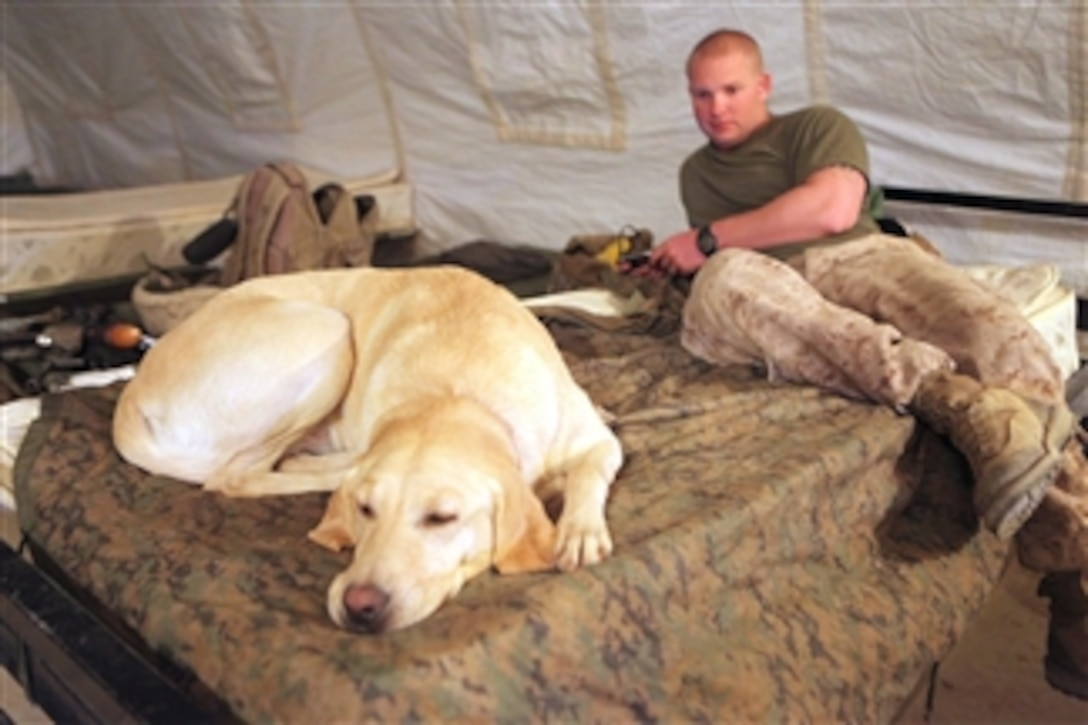 U.S. Marine Corps Lance Cpl. Cody Whitis, a military working dog handler, and his dog Gracie rest at Forward Operating Base Geronimo, Afghanistan, on April 6, 2011. The team was waiting for a flight to Camp Dwyer, where they received advance training in explosive detection techniques.