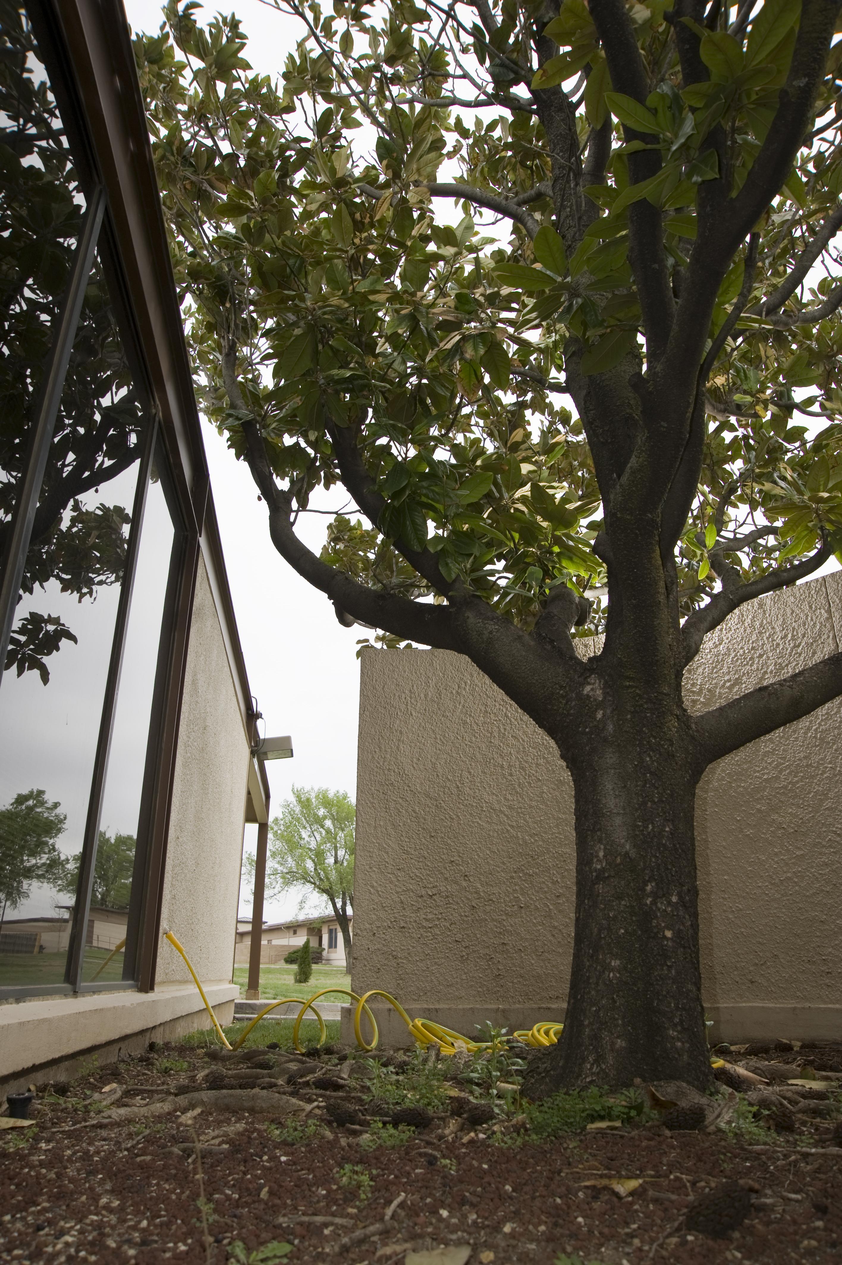 Airmen To Recognize Trees