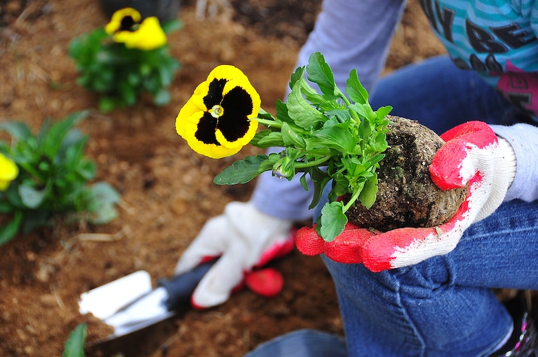 Osan Girl Scouts honored Arbor day/Earth Day by planting 200 yellow pansies and 10 evergreen trees here April 21.  Before the planting, each scout received a brief on the history behind Arbor/Earth Day and the importance of its celebration. The flowers and trees were planted near the elementary school's drop off zone.  (U.S. Air Force photo/Staff Sgt. Daylena Gonzalez)