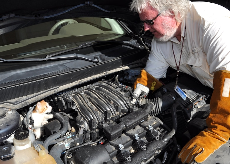 Phillip Remel, CSC pest management, attempts to encourage one of the kittens to exit the engine block, but the young feline had no intention of leaving, retreating behind the engine.  (U.S. Air Force photo by Steve Pivnick)