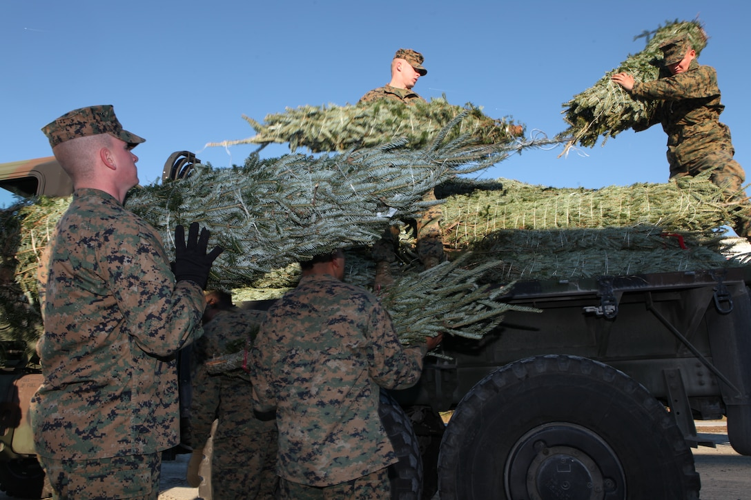 Marines load Christmas trees onto a 7-ton Medium Tactical Vehicle Replacement truck, Dec. 2, at Onslow Beach aboard Marine Corps Base Camp Lejeune.