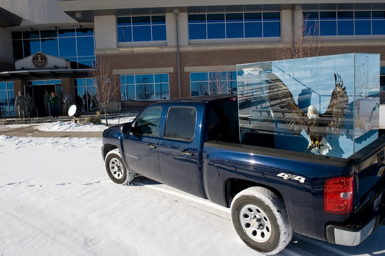 BUCKLEY AIR FORCE BASE, Colo. -- Lucy, a preserved bald eagle, is moved to her new home at the 460th Space Wing headquarters. Under the Bald and Golden Eagle Protection Act, a permit is required to display remains of bald eagles. (U.S. Air Force photo by Airman 1st Class Phillip Houk)