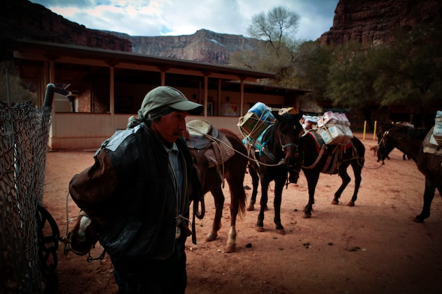 The Havasupai, a Native American tribe living at the bottom of the Grand Canyon, use mules to pickup and deliver mail to the rest of the United States. The route is eight miles long and takes five hours to hike depending on pace, according to some tribal members.::r::::n::