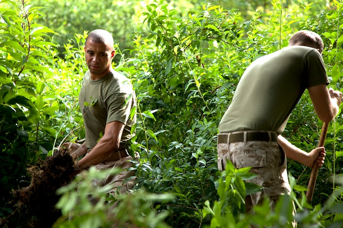 Cpl. Jerod Richardson, a squad automatic rifleman and Lance Cpl. William Foust, a machine gun team leader, both with 3rd Battalion, 24th Marine Regiment, uproot weeds at the Missouri Botanical Gardens June 23, 2011. Marines participated in multiple community service projects around St. Louis as part of Marine Week.