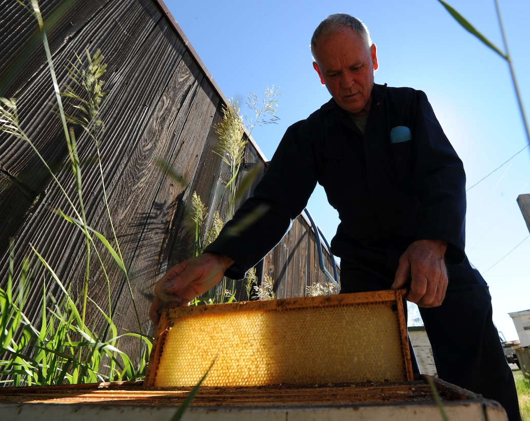 MOUNTAIN HOME, Idaho – Retired Master Sgt. Don Wood, an amateur bee keeper, fills a bee hive with empty combs outside of his residence here June 23. Wood has been working closely with Mountain Home Air Force Base since 2008, with the goal of safely eliminating the problem of swarming honey bees. (U.S. Air Force photo by Senior Airman Debbie Lockhart)