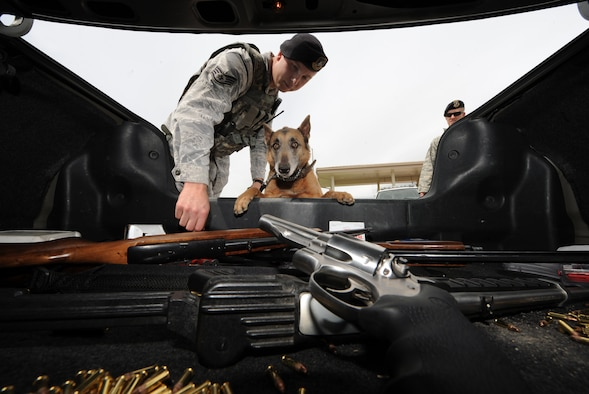 MOUNTAIN HOME AIR FORCE BASE, Idaho – Staff Sergeant Robert Wilson, 366th Security Forces Squadron Military working dog handler, and his dog, Tanja, discover a vehicle trunk full of improperly stored personally owned weapons. All firearms must be locked, kept out of sight and separate from ammunition while being transported on base. (U.S. Air Force photo by Senior Airman Debbie Lockhart)