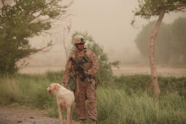 Willie Pete protectively stands by a Marine with Company D, 2nd Light Armored Reconnaissance Battalion, 2nd Marine Division (Forward), during a recent sandstorm while on patrol.  Willy Pete has been patrolling through the area of operations for two years and continues to protect the Marines from wild dogs along their patrol routes.