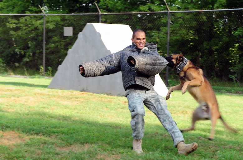 Military working dog Breston attacks and attempts to take down Staff Sgt. Darren Pretlow, 375th Security Force Squadron, Aug. 3 at Scott. Military working dog handlers are trained for 13 weeks at Lackland Air Force Base, Texas, before they are assigned a dog. (U.S. Air Force photo/Staff Sgt. Teresa Jennings)