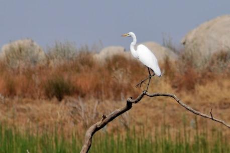 Bird watching is great at Eastman Lake