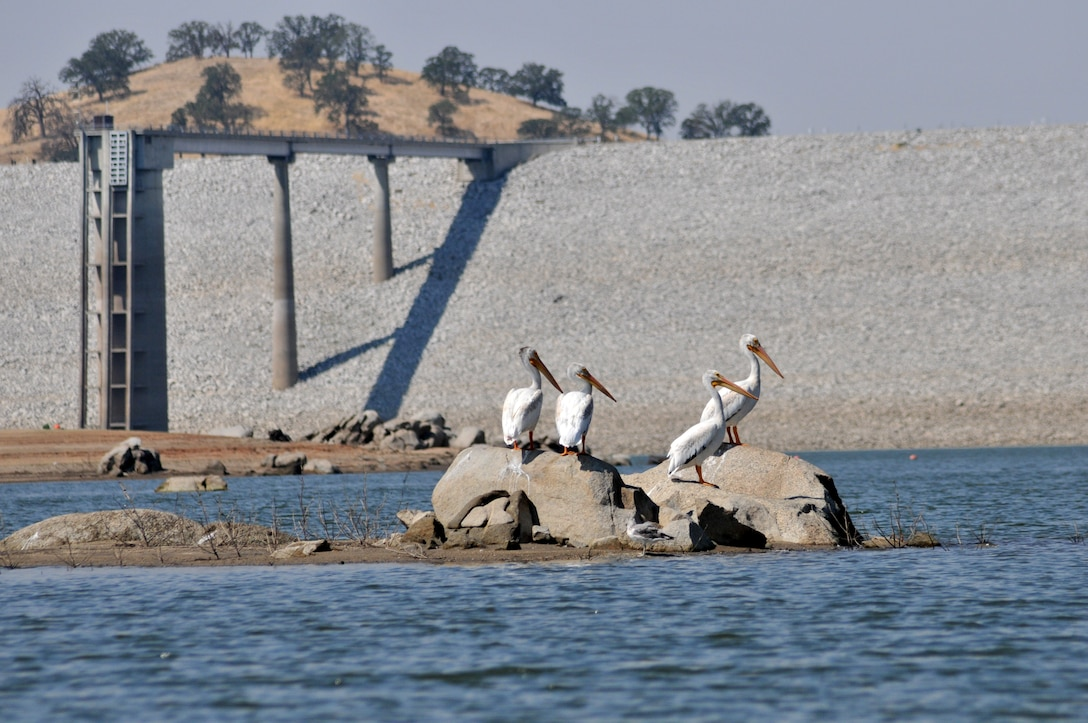 Pelicans enjoy a lakeside view at Eastman Lake