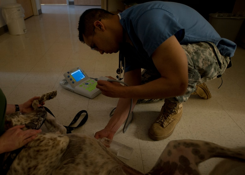 HOLLOMAN AIR FORCE BASE, N.M. - U.S. Army Capt. Matthew Carnett, a veterinarian with Holloman Veterinary Clinic uses an ultrasound machine on a 3-year-old dog named Coffee April 24. The ultrasound is used to check animals for complications, babies, as well as parasites. The Holloman Veterinary Clinic provides care to the pets of active duty and retired military and along with the German Air Force personnel on Holloman AFB. (U.S. Air Force photo by Airman Leah Ferrante/Released)