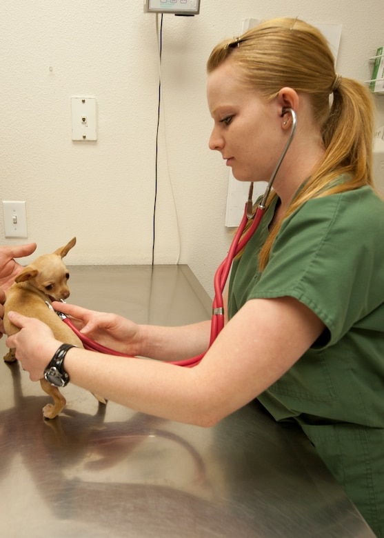 HOLLOMAN AIR FORCE BASE, N.M. - Katie Middlebrook, a veterinary technician with the Holloman Veterinary Clinic, checks a patient's heartbeat April 24. Bella, a 15-week-old Chihuahua visits the clinic to receive a set of shots, and a checkup. The Holloman Veterinary Clinic provides care to the pets of active duty and retired military, along with the German Air Force personnel on Holloman AFB. (U.S. Air Force photo by Airman Leah Ferrante/Released)
