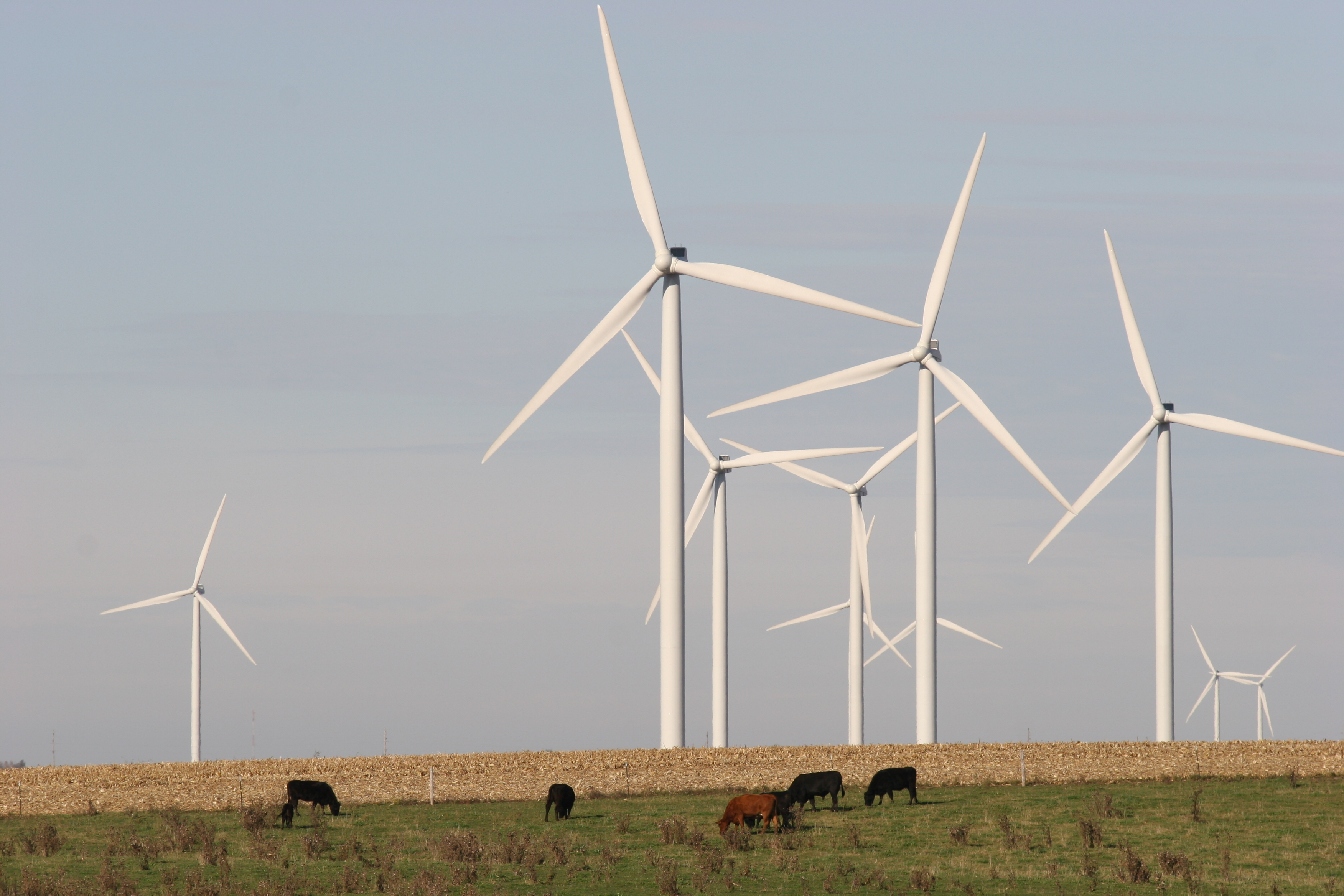 Wind Power Gains Momentum as a Viable Energy Alternative