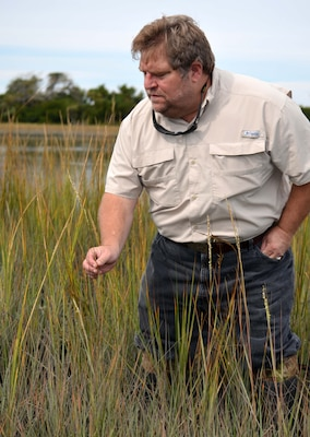 Wilmington District marine biologist Chuck Wilson inspects seeding coastal aquatic marsh vegetation at a former dredged material site near Morehead City, North Carolina. The Wilmington District and other government agencies transformed the site in 1996 from a dredge disposal area to a coastal aquatic marsh that has survived hurricanes, tropical storms and erosion. The site has become habitat for oysters and other shellfish, seabirds and various species of fish. (USACE photo by Hank Heusinkveld)