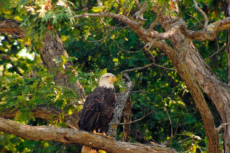 Birdwatchers can view Eagles and other migratory birds in the spring and fall at Rathbun Lake.
