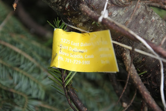 A tag tells the address of where the Christmas trees were donated from during the 2012 Trees for Troops event at Hancock Marina Dec. 10.