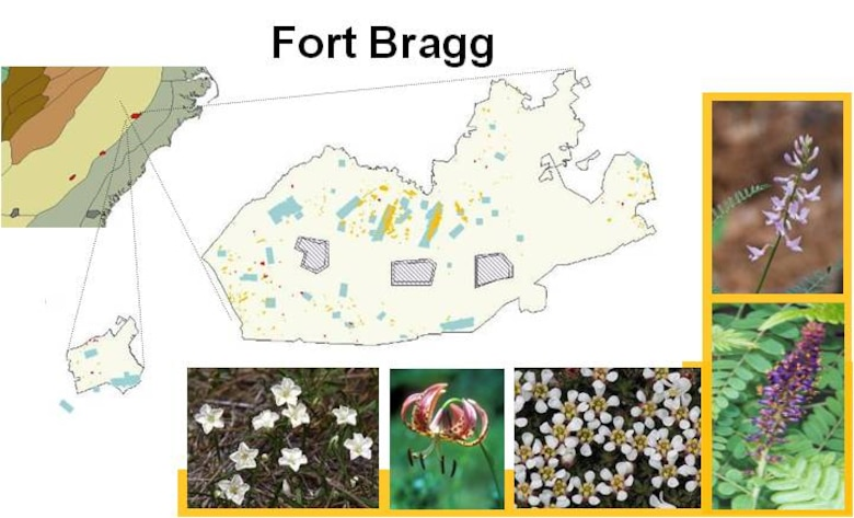 Comprehensive approaches to plant management and conservation at Fort Bragg, N.C. help determine basic species biology, taxonomy, abundance, and distribution.