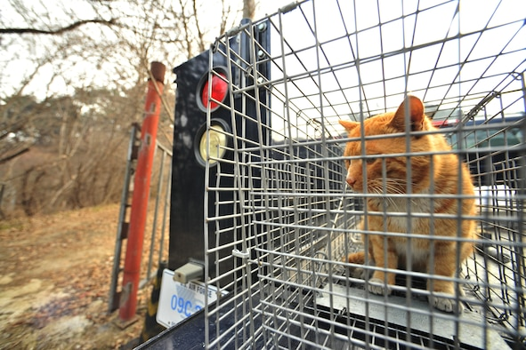 A stray cat is captured by a trap set by 8th Civil Engineer Squadron pest management Feb. 23, 2012 at Kunsan Air Base, Republic of Korea and the cat is taken to an animal shelter in Gunsan City, Republic of Korea. Members of the 8th CES pest management section have eight live traps scattered around base, which are checked twice a day. (U.S. Air Force photo by Senior Airman Brittany Y. Auld/Released)