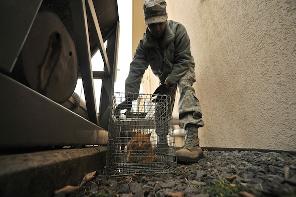 Staff Sgt. Semorian Ford, 8th Civil Engineer Squadron pest management picks up a stray cat to be taken to a local animal shelter Feb. 23, 2012 at Kunsan Air Base, Republic of Korea. Members of the 8th CES pest management section work with a local animal shelter to take in stray animals captured on base. (U.S. Air Force photo by Senior Airman Brittany Y. Auld/Released)