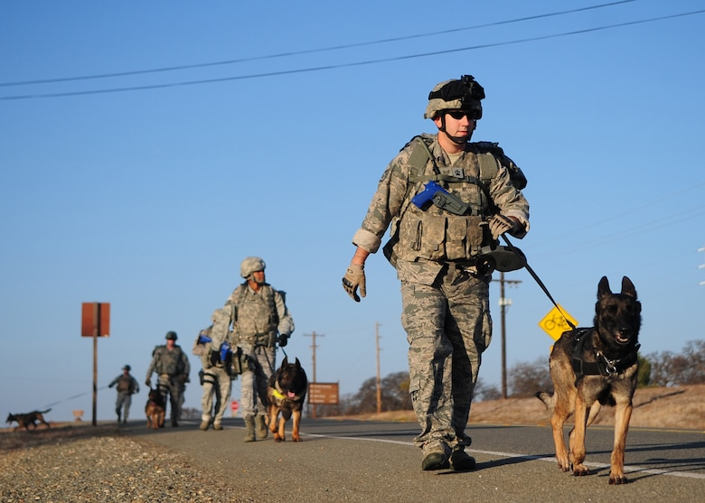 9th Security Forces Squadron military working dog handlers march along Warren Shingle Rd. on Beale AFB during training Jan. 9, 2012. By going on long ruck marches across base and training together outside their kennels, these teams prepare for their mission to support combatant commanders around the world. (U.S Air Force photo by Senior Airman Shawn Nickel/Released)