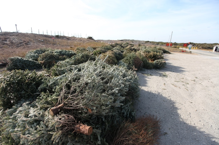 Several hundred Christmas trees were piled high at Onslow Beach aboard Marine Corps Base Camp Lejeune, recently. The Environmental Management Division with MCB Camp Lejeune will be using the collected trees as sand fences to help restore sand dunes at the beach.
