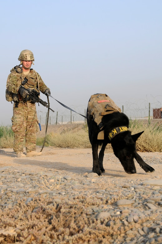 U.S. Air Force Staff Sgt. Larry Harris, a Military Working Dog handler, and his dog, Aaron, run through a training exercise looking for simulated explosives buried along a road at Kandahar Airfield, Afghanistan on July 9, 2012. The handlers and their dogs rotate through Kandahar Airfield for validation prior to moving out to Forward Operating Bases around the country where they will lead combat foot patrols and sniff out IEDs and other explosives. (U.S. Air Force photo/TSgt. Stephen Hudson)