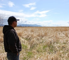 WASHINGTON — Federal agencies worked together with the Lummi Nation to establish the first federally authorized Native American sponsored commercial wetland and habitat mitigation bank in the nation. In this photo, Frank Lawrence III, Lummi Nation, looks over the reed canary grass treatment area.