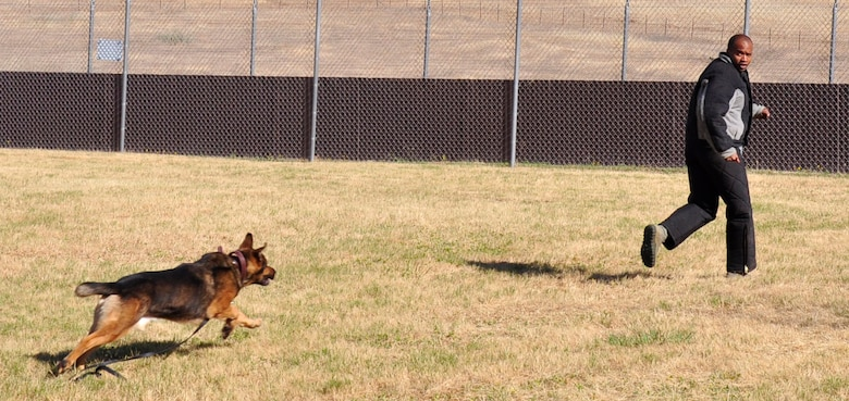 Staff Sgt. Kenneth Houston, 9th Security Forces Squadron military working dog handler, tries to evade a K-9 during a training scenario at Beale Air Force Base, Calif., June 12, 2012. Handlers routinely conduct scenario training to recognize what they may encounter in the field. (Courtesy photo by Noelle Hoffman)