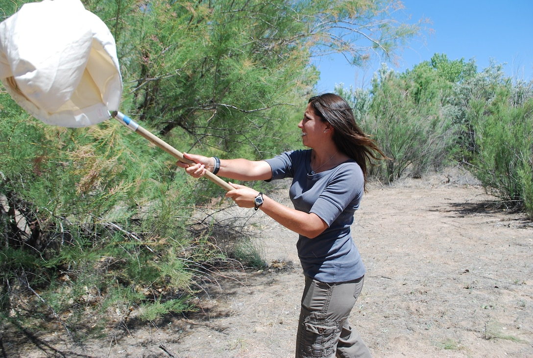 One of the District's biologists, Danielle Galloway, uses a sweep net for capturing Tamarisk Leaf Beetles, a bio-controlling species that is used to help control the spread of Tamarisk.