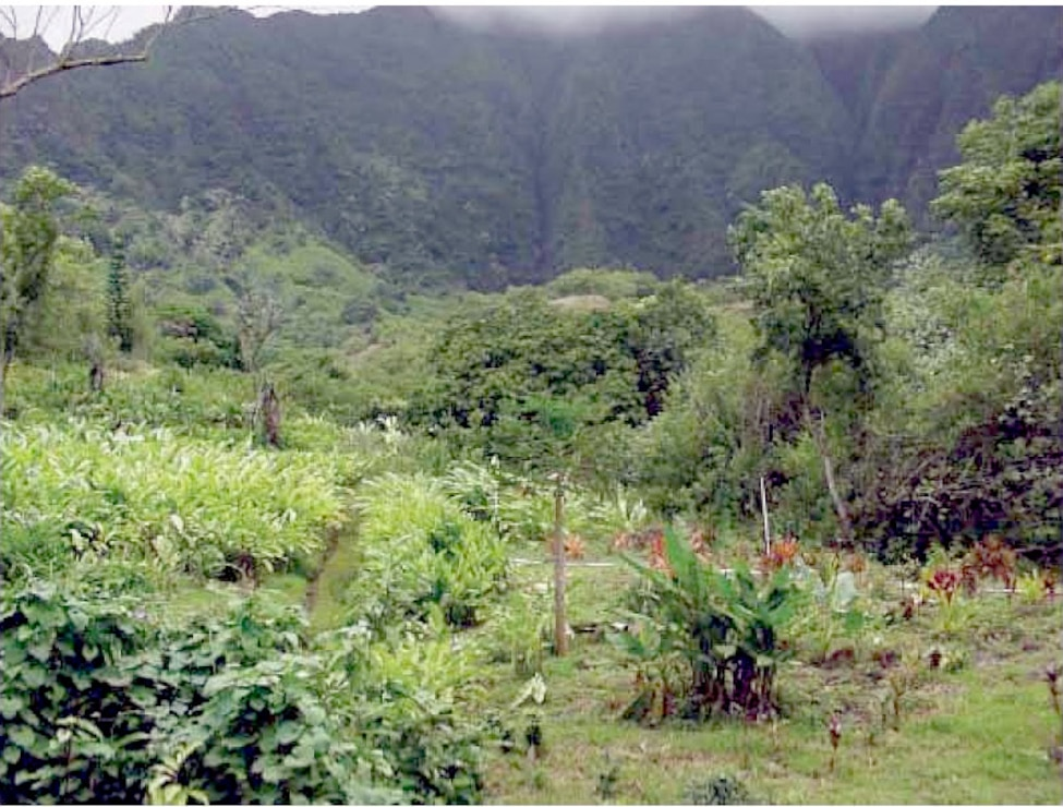 Former Heeia Combat Training Area (CTA) and Former Pali Training Camp (TC)