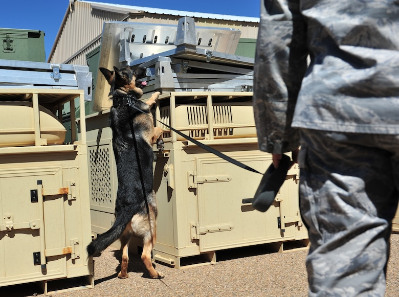 U.S. Air Force Staff Sgt. Steven Perez, 27th Special Operations Security Forces Squadron military working dog handler, performs a detection exercise with his K-9 unit near a warehouse at Cannon Air Force Base, N.M., March 15, 2012. All K-9 units assigned to Cannon are dual purpose patrol and detections canines responsible for protecting base personnel and resources. (U.S. Air Force photo by Airman 1st Class Alexxis Pons Abascal)