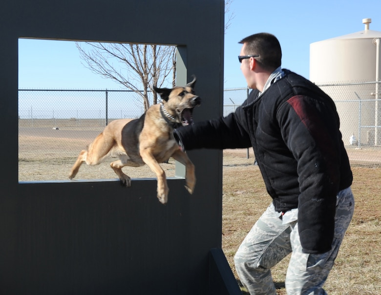 U.S. Air Force Staff Sgt. Kenneth Holt, 27th Special Operations Security Forces Squadron military working dog handler, practices suspect take-down bite drills with K-9 unit Ben K326 at an obstacle course for MWDs at Cannon Air Force Base, N.M., March 15, 2012. All K-9 units assigned to Cannon are dual purpose patrol and detections canines responsible for protecting base personnel and resources. (U.S. Air Force photo by Airman 1st Class Alexxis Pons Abascal)
