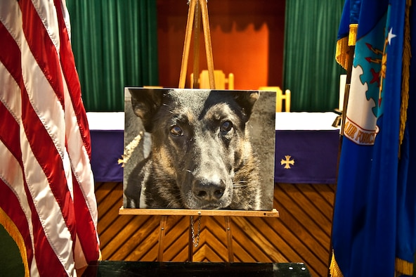 A photo of Rony, a deceased military working dog from the 1st Special Operations Security Forces Squadron, is on display during a memorial ceremony at the base chapel on Hurlburt Field, Fla., March 16, 2012. Rony, who served Hurlburt Field for more than seven-and-a-half years, was euthanized March 7, 2012 to alleviate suffering from enduring cancer and recent internal bleeding. (U.S. Air Force photo/Airman 1st Class Christopher Williams)(Released)