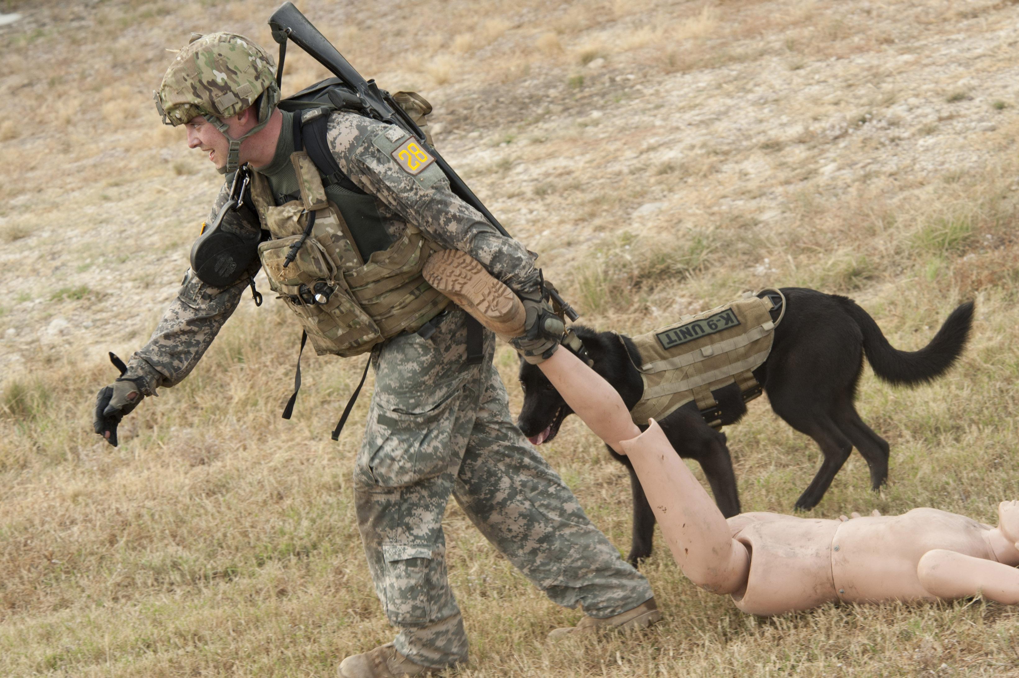 Free Service Dog Training For Veterans