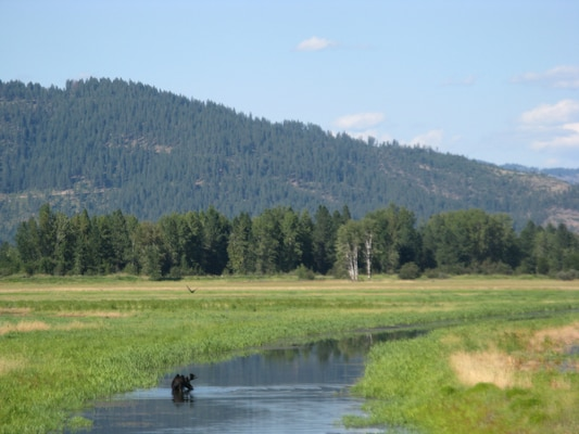 To provide a cleaner waterfowl feeding ground in the midst of an area contaminated from historic mining operations, the Seattle District, recently finished transforming agricultural lands into wetland habitat at a privately owned farm east of Lake Coeur d'Alene, Idaho.