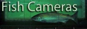 Fish cameras