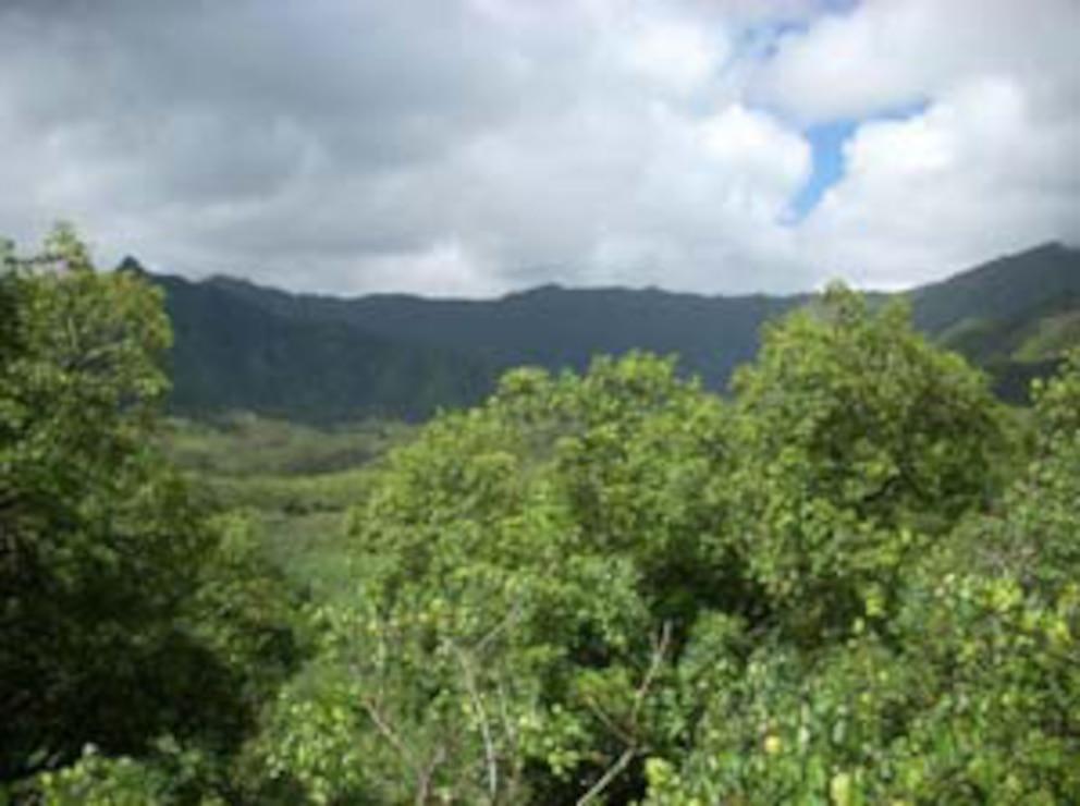 Pacific Jungle CTC