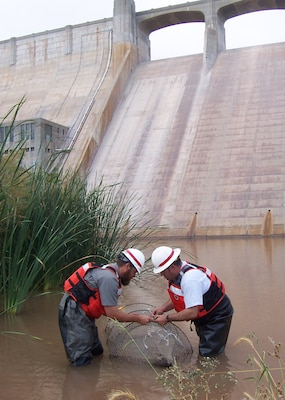 CONCHAS DAM, N.M., -- Albuquerque District Ranger Michael Vollmer and Maintenance Worker Carl Latham endured mosquitoes and leeches while setting the turtle traps.