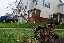 A tree was uprooted on Dover Air Force Base, Del., as a result of the high wind and heavy rainfall from Hurricane Sandy Oct. 30, 2012. (U.S. Air Force photo/Master Sgt. Jeanette Spain)