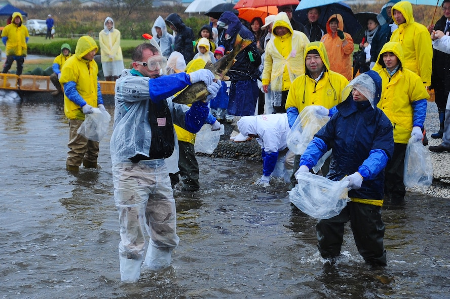 Col. Stephen Williams, 35th Fighter Wing commander, catches a salmon at Salmon Park, Oirase, Japan, at the start of the annual Oirase Salmon Catching Festival, Nov. 10, 2012.  Local dignitaries and officials began the salmon catching by wrestling in the first catch of the day. (U.S. Air Force photo/ Staff Sgt. April Quintanilla)