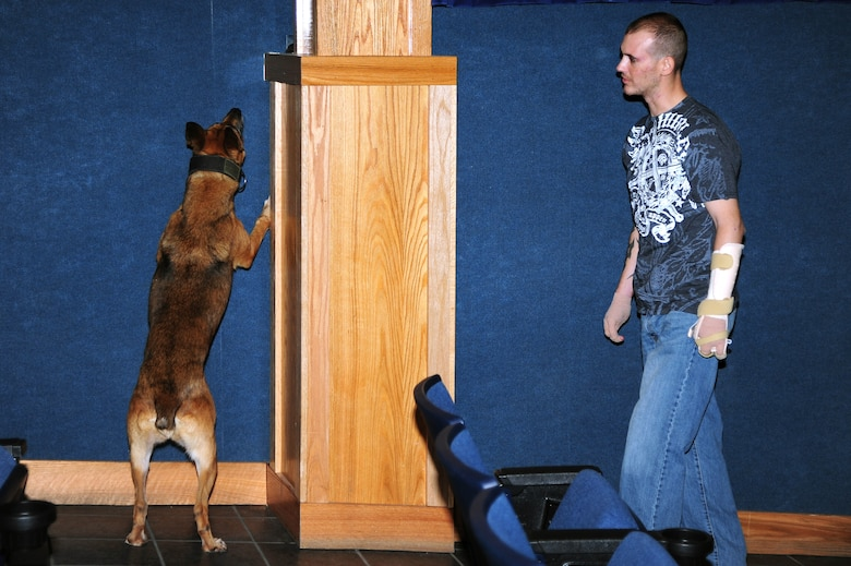 Staff Sgt. Leonard Anderson, 59th Patient Squadron, Lackland Air Force Base, Texas, conducts detection training with Azza, 354th Security Force Squadron military working dog, at the base theater Oct. 17, 2012, Eielson Air Force Base, Alaska. Anderson, a former 354th SFS MWD handler, returned to Eielson where he was reunited with Azza after months of recovery following an attack during his deployment to Afghanistan. (U.S. Air Force photo/Airman 1st Class Zachary Perras)