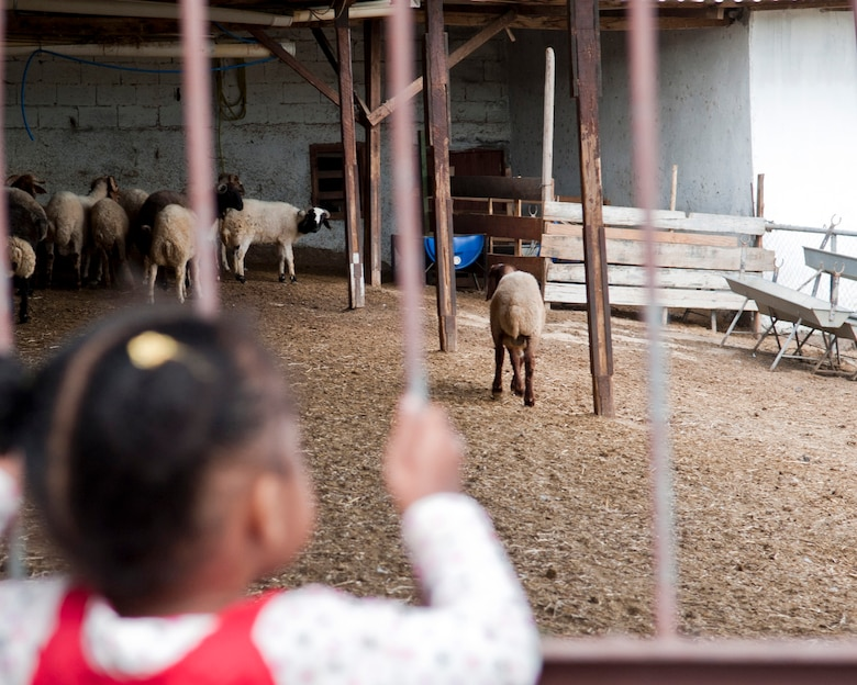 A child holds onto the bars of a gate and watches some sheep at Ekotepe Organic Farm Nov. 11, 2012. On top of their organic food, guests can also enjoy interacting with the animals at Ekotepe. (U.S. Air Force photo by Senior Airman Daniel Phelps/Released)