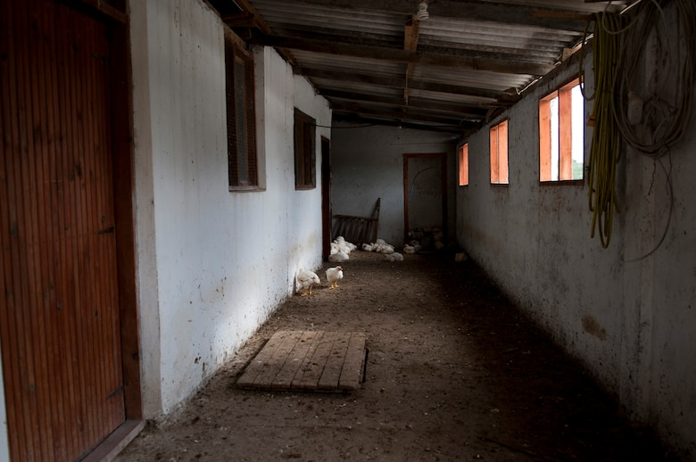 Chickens wander around in a building at Ekotepe Organic Farm Nov. 11, 2012, near Adana, Turkey. A variety of animals reside at the farm including peacocks, chicken, sheep and horses. (U.S. Air Force photo by Senior Airman Daniel Phelps/Released)