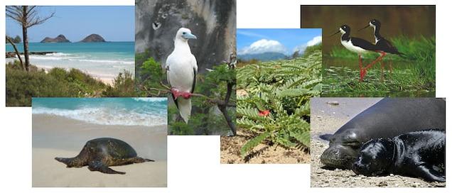 Natural Resources Fish, Wildlife & Plants