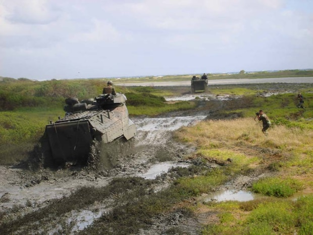 """Each year the Environmental Dept engages 3rd Marines' Combat Assault Company (CAC) to perform the annual site preparation for the endangered Hawaiian Stilt breeding season (Mar-Sep). The CAC's Amphibious Assault Vehicles (AAVs) are used to break-up the non-native invasive pickleweed or akulikuki kai (Batis maritimas) covering the mud flats used for nesting. This annual 3-day operation known as """"Mud Ops"""" has been a yearly event since 1982, and is usually conducted mid-February. Besides supporting the Environmental Dept's management objectives for the Nu'upia Ponds, the Marines operating the AAVs are provided a unique and valuable training opportunity."""