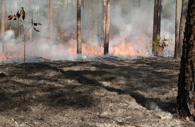 Prescribed fire season begins on Joint Base Charleston in December and extends through May, 2013. A prescribed or controlled fire is a low intensity, carefully managed fire set under exacting conditions for specific purposes by experienced, trained personnel. (Courtesy photo)