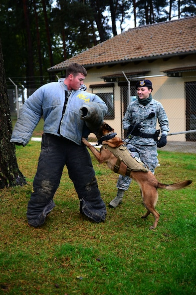 SPANGDAHLEM AIR BASE, Germany – U.S. Air Force Staff Sgt. Shannon Hennessy, 52nd Security Forces Squadron military working dog handler from Colusa, Calif., and her dog Katya, demonstrate K-9 unit capabilities on Senior Airman Gilbert Lundgren, military working dog handler from Kenosha, Wis., Oct. 15, 2012, at a K-9 unit demonstration.  German Shepherds and Belgian Malinois are the breed of dogs that make up the 52nd SFS military working dog unit. (U.S. Air Force photo by Airman 1st Class Gustavo Castillo/Released)
